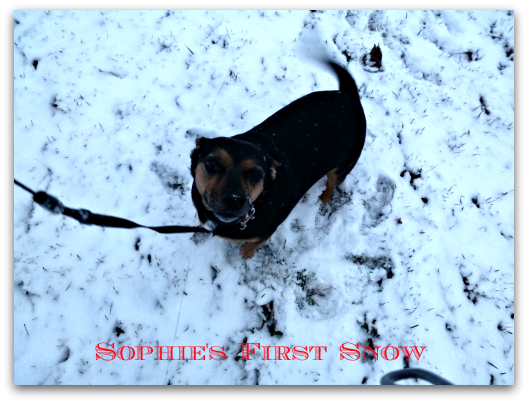 Sophie's First Snow