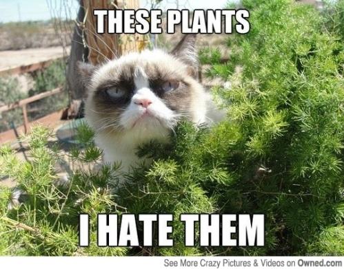 grumpycatplants